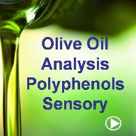 Olive Oil Analysis, Polyphenols and Sensory Analysis